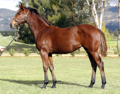 Lot 367 - colt x Come Fly With Me $50k to Dermot Farrington