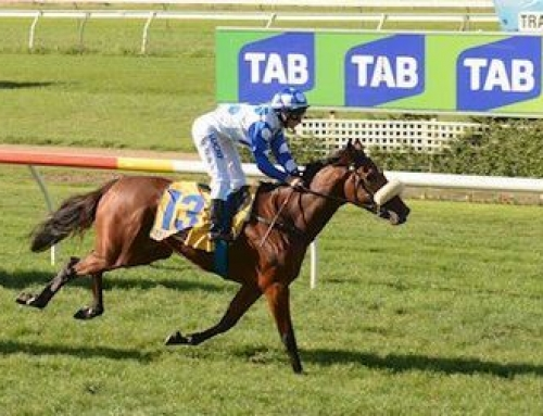 VINERY BRED FILLY SALUTES