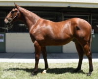 All Too Hard 3yo Castleton as a yearling with Raheen at Magic Millions