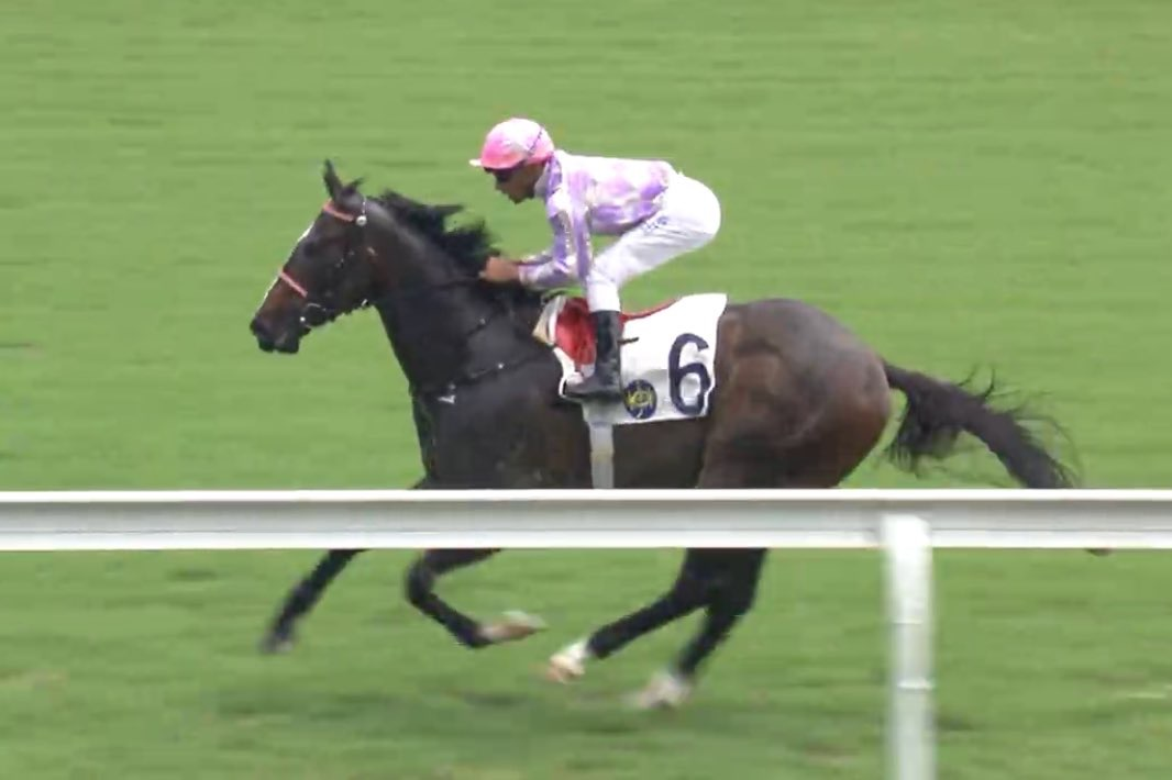 All Too Hard sires a winner with debut HK runner Alcari