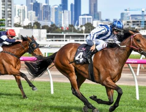 AMELIE'S STAR SHOOTS FOR CUP