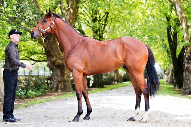 All Too Hard's Ready To Run colt sells into Asia for $260,000
