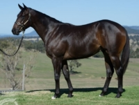 Flash Cash as a yearling