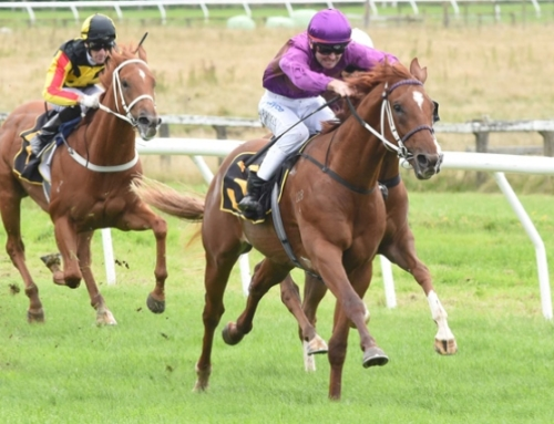 LINCOLN HILLS IN  GUINEAS