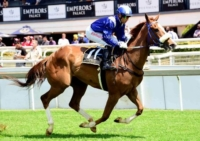 Shufoog for Shadwell Stud