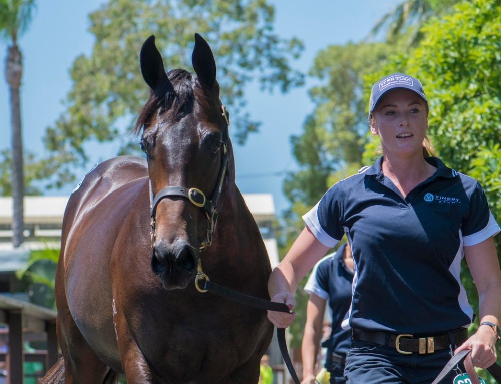 COMMANDING COLT FROM VINERY