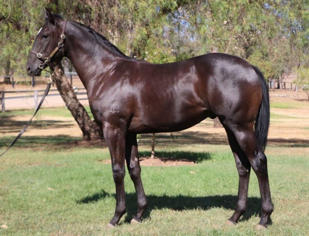 PRIZED PLUCK AT CLASSIC SALE