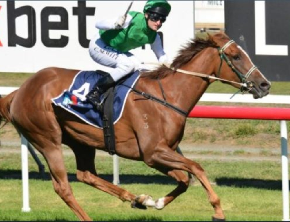 MORE STAKES SUCCESS FOR PLUCK