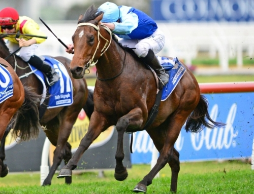 TARKA ON TRACK FOR GLOAMING STAKES