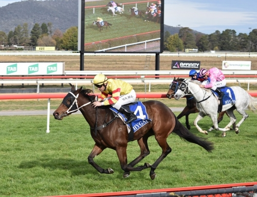 HAPPY HORSE HEADS TO GRAFTON