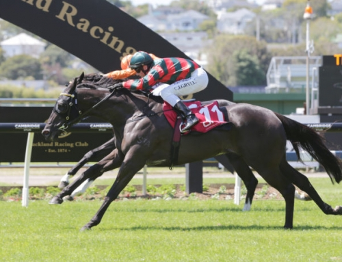 GROUP 1 SPRINGBOARD FOR MORE THAN READY