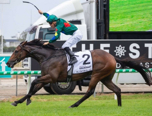 ALLIGATOR BLOOD DOMINATES A MAGIC GUINEAS
