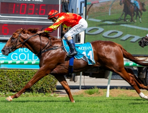 HEADWATER COLT HEADS TO CARNIVALS