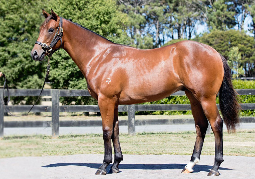 CLASSIC SALE TO REMEMBER – VINERY STUD