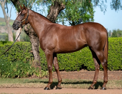 Lot 174 – Runway Star x Sebring filly
