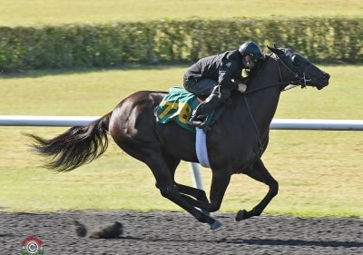 More Than Ready filly