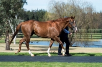 Star Turn turning heads at Vinery Stud's 2017 parades