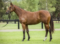 All Too Hard filly Za Zi Ba as a $400k Easter Yearling