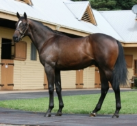 Testa Rossa winner pictured prior to the 2016 Melbourne Premier yearling sale