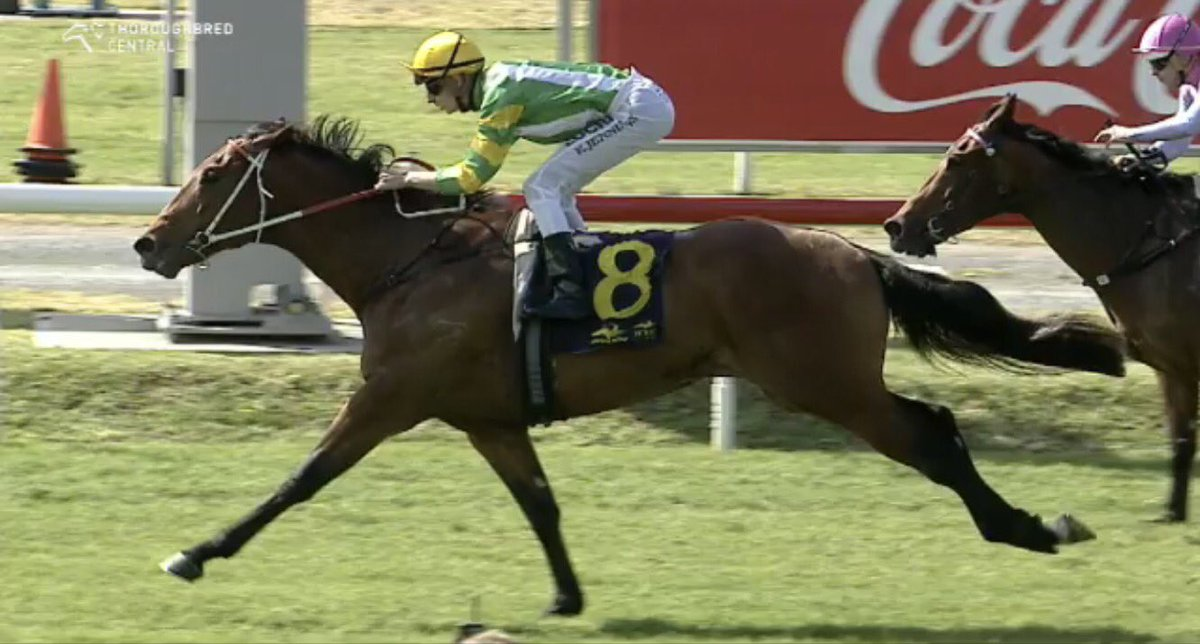 All Too Hard 3yo Newburgh wins Newcastle for Team Hawkes