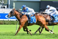 Mossman Galloper Crack_Me_Up wins 5th Stakes race