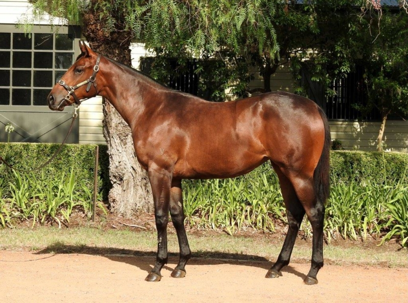 Vinery Classic Yearling