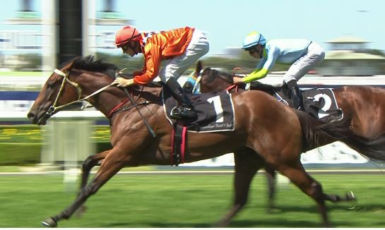 All Too Soon on route to the ATC Oaks for David Payne