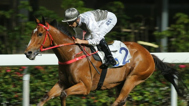 Mossman galloper Ivictory in Hong Kong