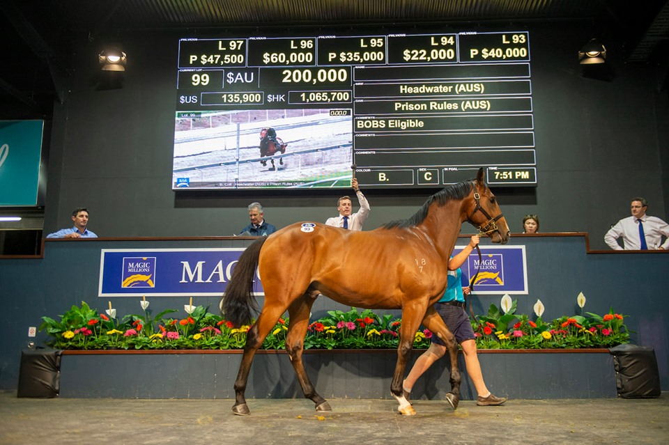 HEADWATER RULES AT 2YO SALE