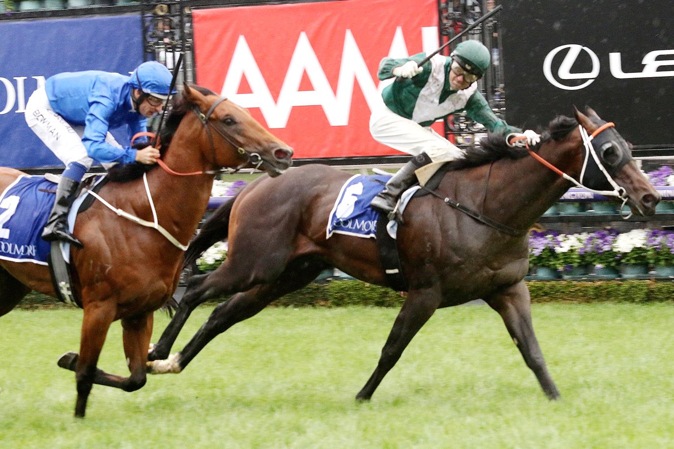EXCEEDANCE AWESOME IN THE COOLMORE
