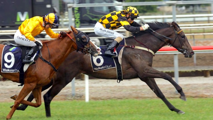 MORE 2YO STAKES WINNERS FOR MORTY