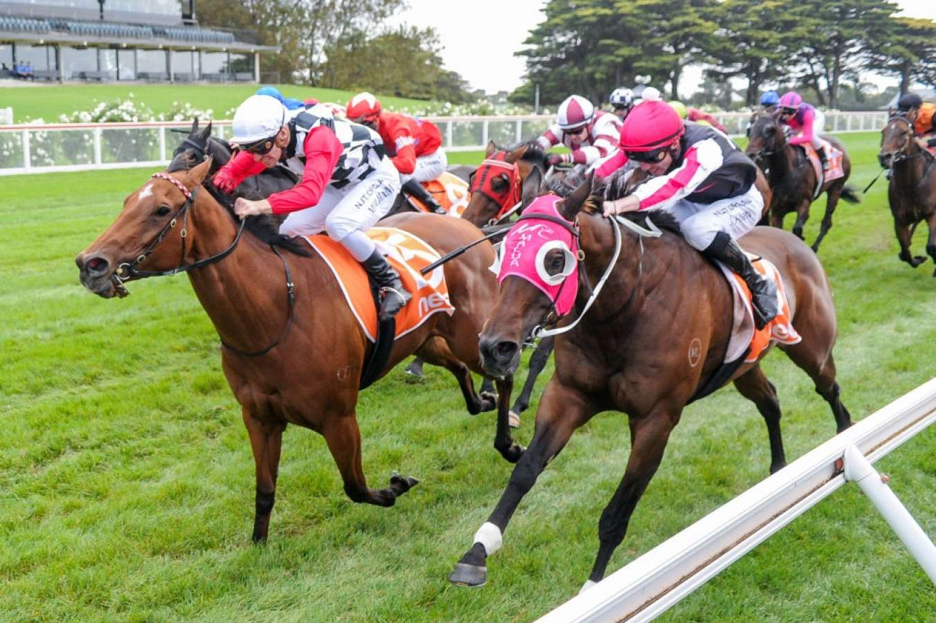 DIAMOND TRUMPS RIVALS IN HAREEPA STAKES