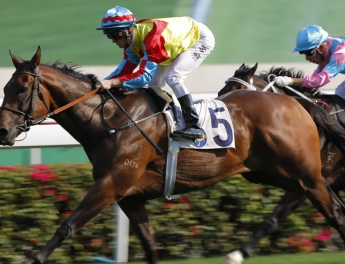 WELLINGTON PRIMED FOR HK PRIZE
