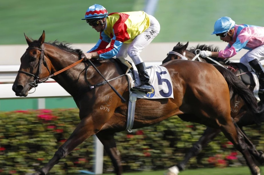 ARROGANT HONG KONG WINNER BY ALL TOO HARD