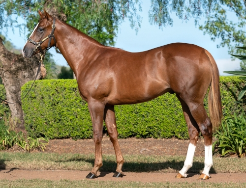 VALUE FOUND AT INGLIS EASTER