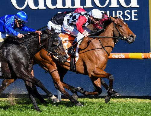 MOSSMAN MARE SET FOR GR.1 MOIR STAKES