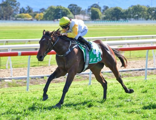 HEADWATER QUINELLA AT HAWKESBURY