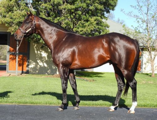 EXCEEDANCE EXCELLING IN NEW CAREER AT STUD