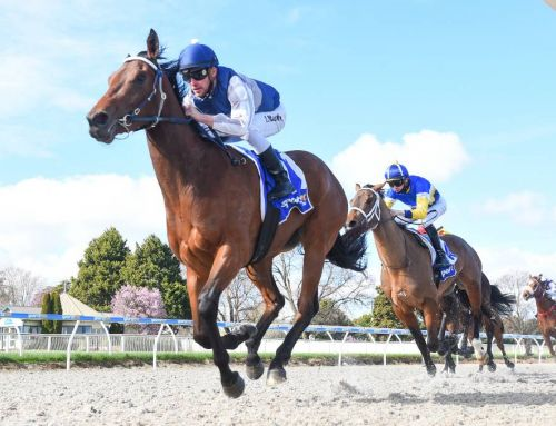 HEADWATER FILLIES FOCUS ON BLACK-TYPE
