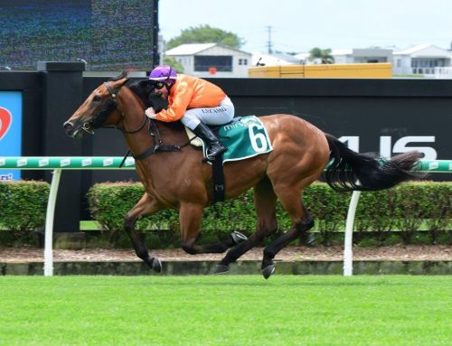 SAVVY MISS FIRST WINNER BY STAR TURN
