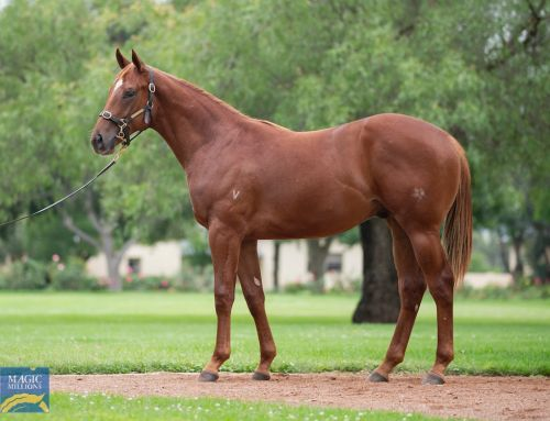 VINERY COLTS MAKE $600,000 ON DAY 2