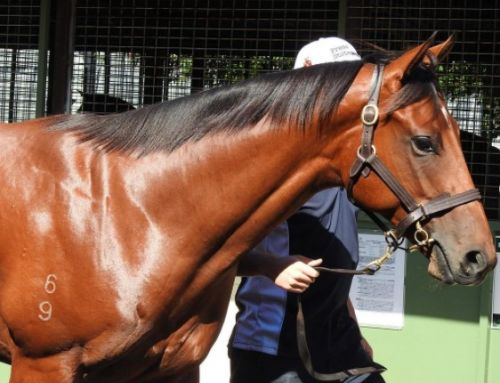 VINERY COLT A GROUP 1 PLAYER