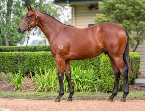 VINERY COLT LIGHTS UP OAKLANDS