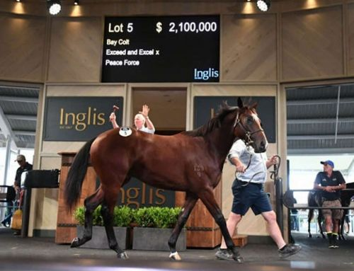 VINERY THE BENCHMARK AT INGLIS EASTER SALE