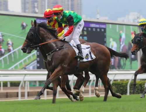 ANOTHER WINNERS SURGE BY STAR TURN