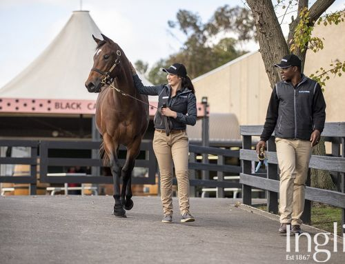 VINERY SIRES GOING FOR GOLD