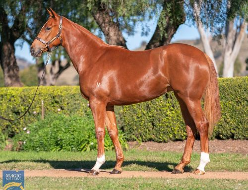 LEGEND'S FILLY A MUST FOR MILBURN CREEK