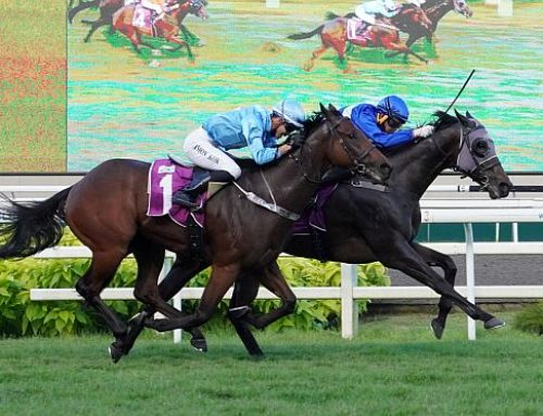 HEADWATER SIRES NEW SINGAPORE STAR