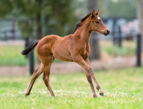 EXCITING FIRST FOALS BY EXCEEDANCE